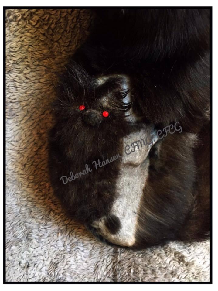 Flying Bat, by Deborah Hansen, CFMG, CFCG, creative cat grooming