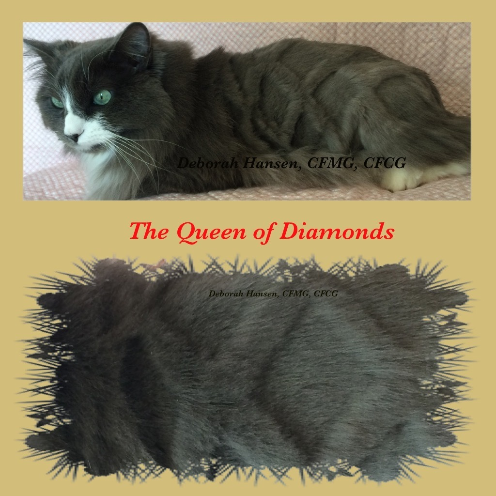 Queen of Diamonds by Deborah Hansen, CFMG, CFCG, creative cat grooming
