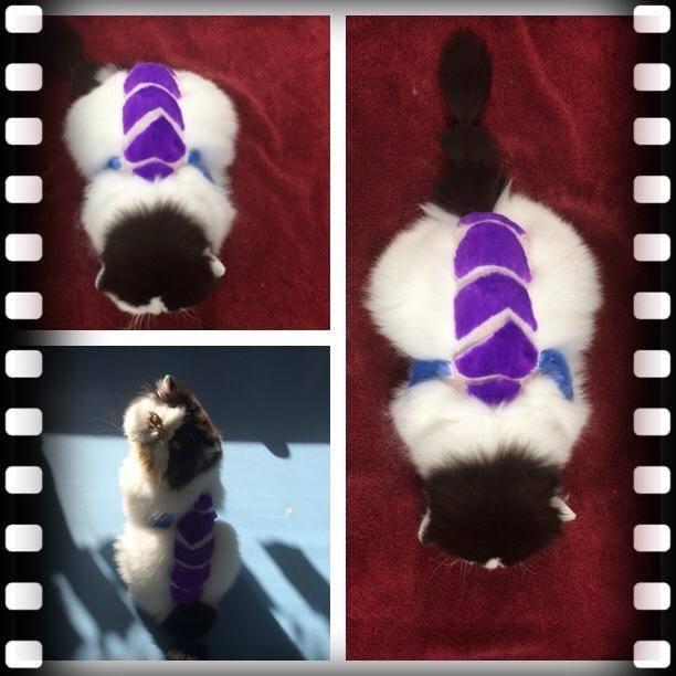 Dragonfly, by Deborah Hansen, CFMG, CFCG, creative cat grooming