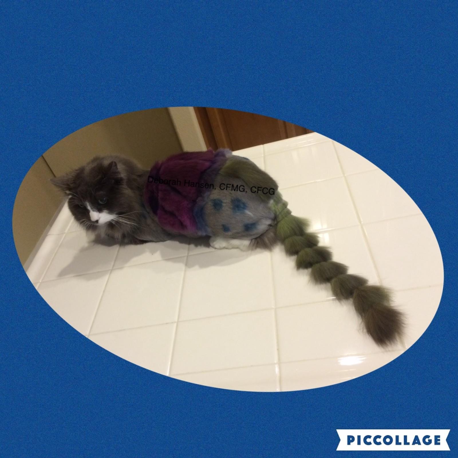 Umbrella Cat by Deborah Hansen, CFMG, CFCG, creative cat grooming