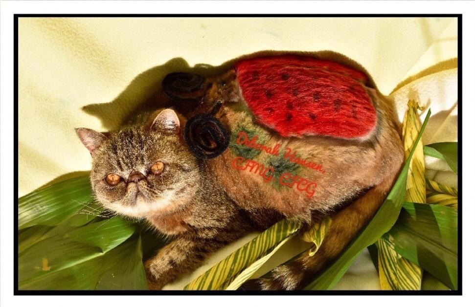 Lady Bug by Deborah Hansen, CFMG, CFCG, creative cat grooming