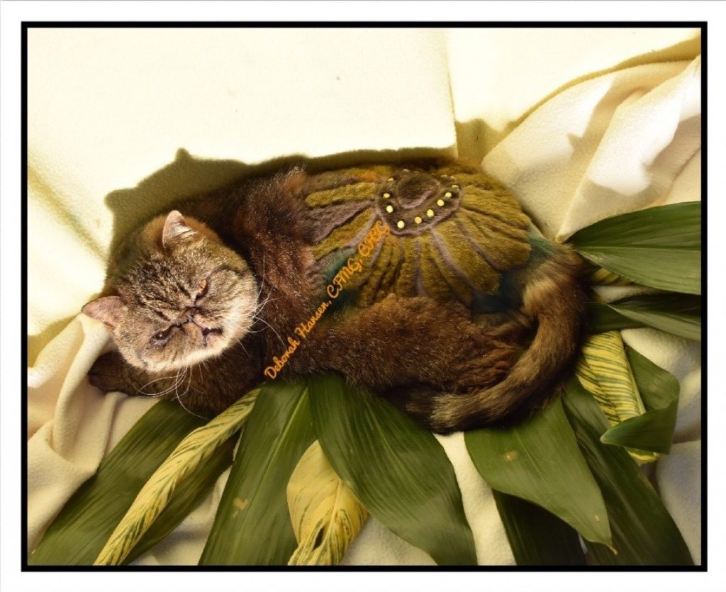 Sunflower by Deborah Hansen, CFMG, CFCG, creative cat grooming