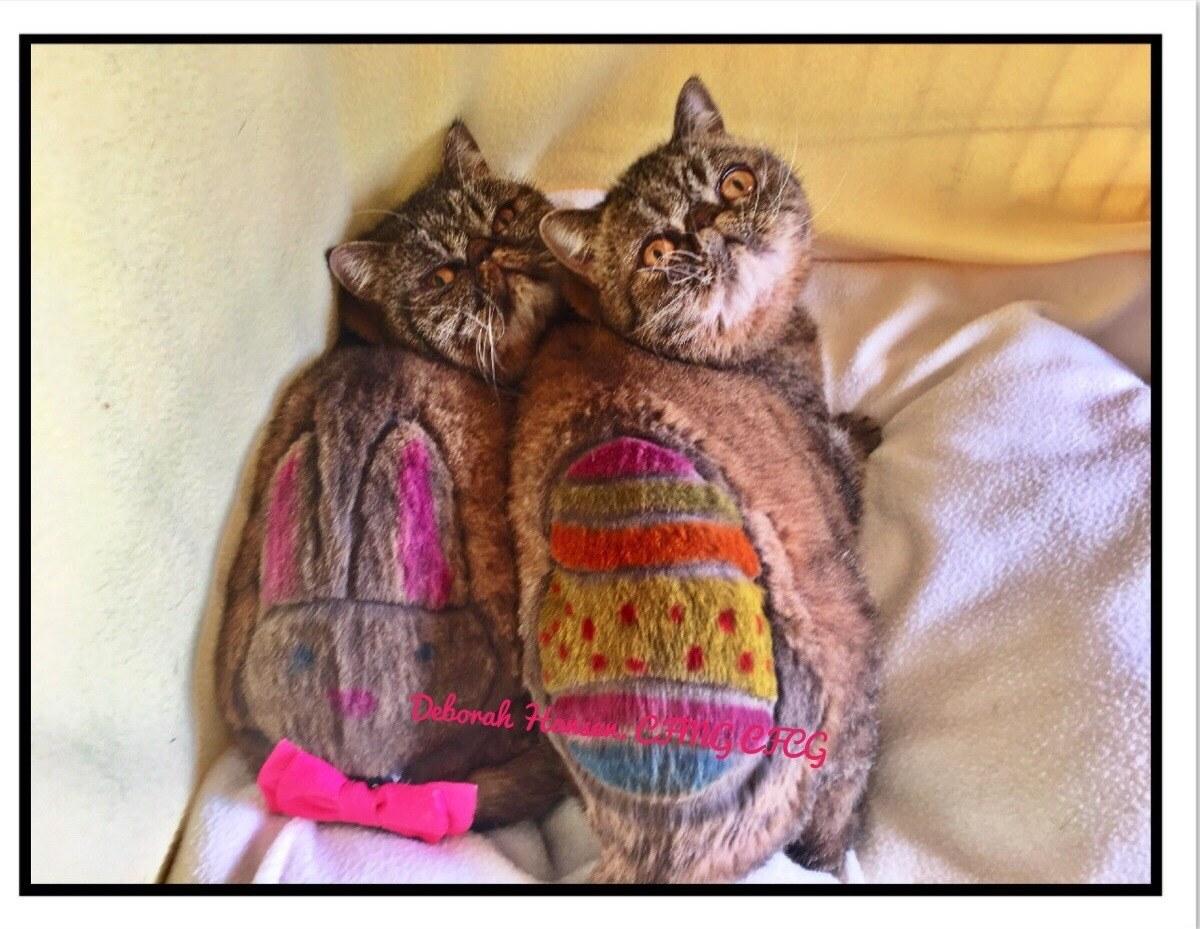 Happy Easter, by Deborah Hansen, CFMG, CFCG, creative cat grooming
