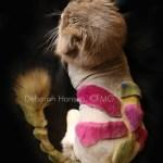 Creative Cat Grooming by Deborah Hansen