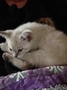 In Home Cat Grooming by Deborah Hansen