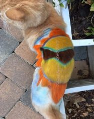 Sunny by Deborah Hansen, CFMG, CFCG, creative cat grooming