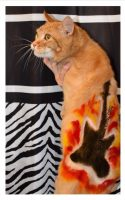 Rocker by Deborah Hansen, CFMG, CFCG, creative cat grooming